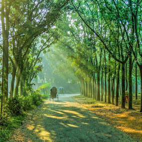 Beauty of Nature by Topu Saha - City,  Street & Park  Street Scenes ( ray, winter, park, nature, street, sunrays, ray of light, beauty, morning, sunbeam, rays, , #GARYFONGDRAMATICLIGHT, #WTFBOBDAVIS )