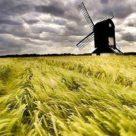 Breezy by Jerry Kambeitz - Landscapes Prairies, Meadows & Fields ( field, sweden, skane, windy, windmill )