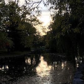 Riverside  by Katie Neu - Instagram & Mobile iPhone ( park, tree, fall, willow, dusk, river )