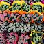 Colours, Colours by Bozica Trnka - Flowers Flower Arangements ( colour, green, white, pink, yellow, flower )