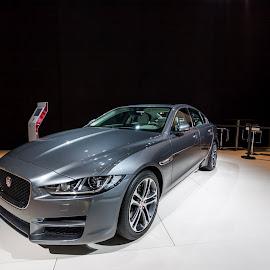 Jaguar by Lucian Vlad-Calcic - Sports & Fitness Motorsports