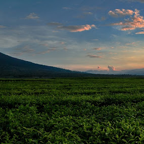 kerinci by Syahbuddin Nurdiyana - Landscapes Mountains & Hills