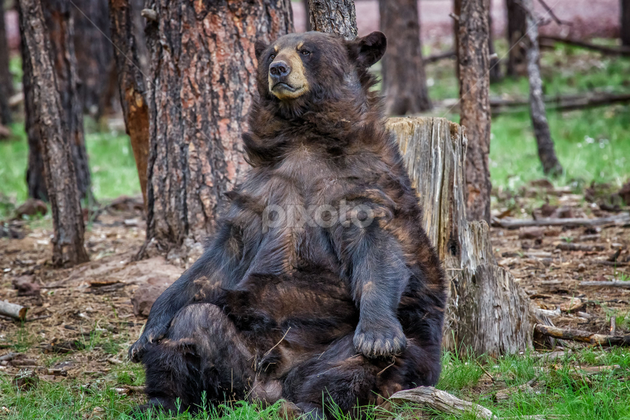 Black bear. by Stanislav Horacek - Animals Other Mammals