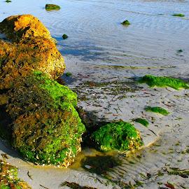 Beach Rock by Paul S. DeGarmo - Nature Up Close Rock & Stone ( moss, stone, rock, beach )