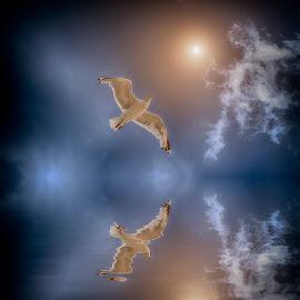 seagull reflection by Egon Zitter - Digital Art Animals ( water, bird, gull, seagull, sea, ocean )