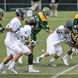 Loose Ball Scramble by Elk Baiter - Sports & Fitness Lacrosse ( green terror, umw, university of mary washington, midfielder, eagles, lacrosse, mcdaniel college )