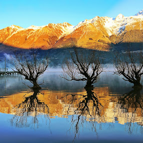 Willows by Jomy Jose - Landscapes Waterscapes ( willows, queenstown, hannahsdreamz, tree in water, jomy jose, glenorchy, new zealand )