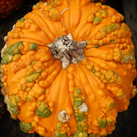 Warty Pumpkin by Mill Tal - Food & Drink Fruits & Vegetables