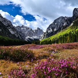 Krma 2 by Bojan Kolman - Landscapes Mountains & Hills