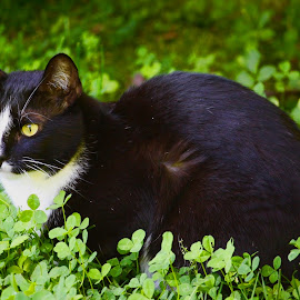Bird Killer by Debra Branigan - Animals - Cats Playing ( cats, animals, playing cats, hunting, photography,  )