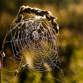 by Brian Mounsher - Nature Up Close Webs