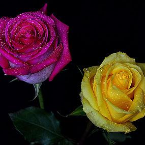by Andrew Piekut - Flowers Flower Arangements (  )