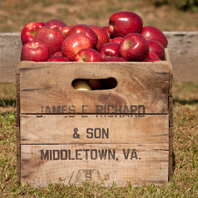 Crate of Apples by Mitzi Sibert - Nature Up Close Gardens & Produce ( fruit, nature, apples )