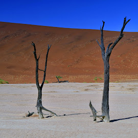 by Stanley P. - Landscapes Deserts