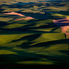 Long Shadows by Scott Wood - Landscapes Prairies, Meadows & Fields ( wheat, palouse, green, nxnw, expeditionpalouse, landscape, spring, field, washington, nxnw2015, shadow, brown, steptoe, light, explorethefrontier,  )