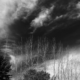 Eery Sky by Tina Beck - Instagram & Mobile iPhone ( clouds, trees, storm )
