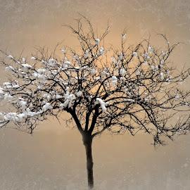 Snow by Stefania Loriga - Nature Up Close Trees & Bushes