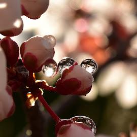 Water drops by Denton Thaves - Nature Up Close Natural Waterdrops ( waterdrops )