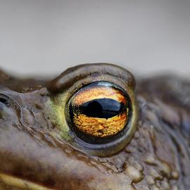 by Olga Havlíčková - Animals Amphibians