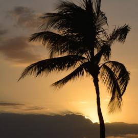 Sunset Palm by Judy Tomlinson - Landscapes Sunsets & Sunrises ( orange, palm tree, maui, sunset, tropical, d5200, beach, http://www.judymtomlinsonphotography.ca, hawaiian islands, flare, usa, island,  )
