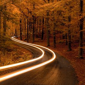 E v e r y - R o a d - H a s - 2 - D i r e c t i o n s. by Manu Heiskanen - Uncategorized All Uncategorized ( lights, curvy, tree, autumn, fall, headlight, trees, road, yellow, leaves, longexposure, paulinawolekpardon,  )