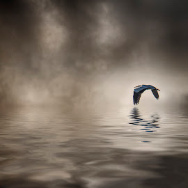 Heron by Egon Zitter - Digital Art Animals ( bird, reflection, fly, heron, mist )
