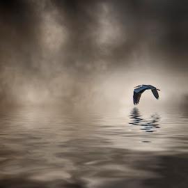 Heron by Egon Zitter - Digital Art Animals ( bird, reflection, fly, heron, mist )