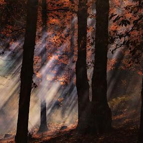 EL BOSQUE ENCANTADO by Miguel Lopez De Haro - Nature Up Close Leaves & Grasses ( castaño, bosques, naturaleza,  )