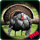 Download Turkey Hunting Calls APK for Android Kitkat