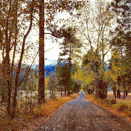 Country road, fall by D.j. Nichols - Instagram & Mobile Android ( country road )