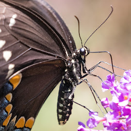 by Dennis Bartsch - Animals Insects & Spiders