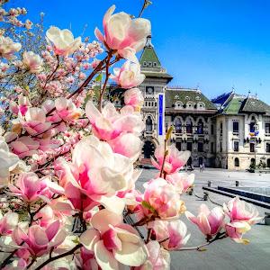 Piata M. Viteazul, Craiova.jpg