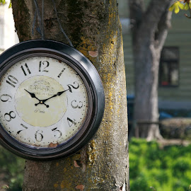 Old watch by Mario Horvat - Artistic Objects Antiques ( old, tree, antiq, watch, street, ljubljana,  )