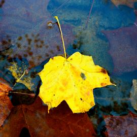 Set a drift by Dave Feldkamp - Nature Up Close Leaves & Grasses (  )