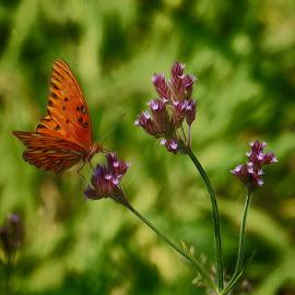Butterfly Dreams II (Oil Point Effect) by Alycia Marshall-Steen - Digital Art Animals