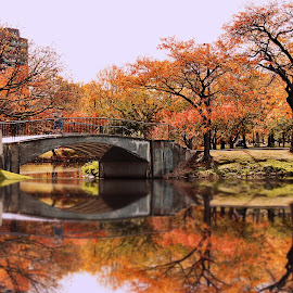 Bridge Defined by Kelley Conkling - City,  Street & Park  City Parks ( water reflections, boston, park, autumn, fall, parks, reflections )