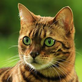 by Jane Bjerkli - Animals - Cats Portraits
