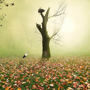 mist-in-the-wonderland.jpg