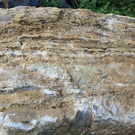 by Lenora Popa - Nature Up Close Rock & Stone ( field, macro, nature, nature up close, rock )