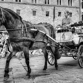 by Manuela Dedić - Black & White Street & Candid