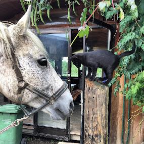 by Ivana Tilosanec - Novices Only Pets ( cats, love, ranch, animals, cat, friends, sweet, horses, arabianhorse, pets, horse, whitehorse, cute, blackcat,  )