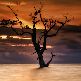 lonely tree by David Loarid - Nature Up Close Trees & Bushes
