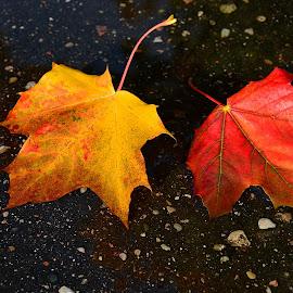 by Eugenija Seinauskiene - Nature Up Close Leaves & Grasses
