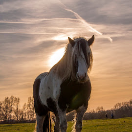 Port Meadow Horse by Tim Hall - Animals Horses ( animals, portmeadow, horse, oxford, portrait )