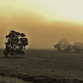 Breaking Dawn by Sarah Harding - Novices Only Landscapes ( countryside, sepia, fog, novices only, landscape )