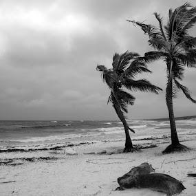 3Palmas by Cristobal Garciaferro Rubio - Landscapes Beaches ( water, palm, sand, cozumel, palms, sea shore )