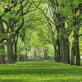 Central Park by Carol Plummer - City,  Street & Park  City Parks