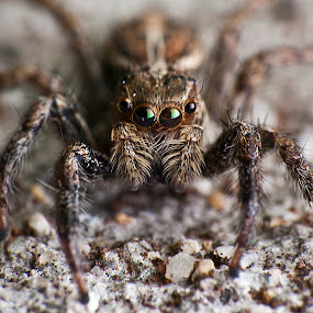 Stop And Stare by Nadzli Azlan - Animals Insects & Spiders