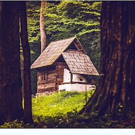 Wondergrove by Alexandra Gogu - Buildings & Architecture Homes