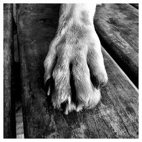 MiPaw by Gareth  Evans - Instagram & Mobile iPhone ( dog paw mono pet )